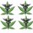 PNW Cannabis Club
