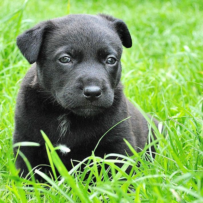 adopter un chien chien57390 twitter. Black Bedroom Furniture Sets. Home Design Ideas