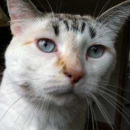 Pincy Cat