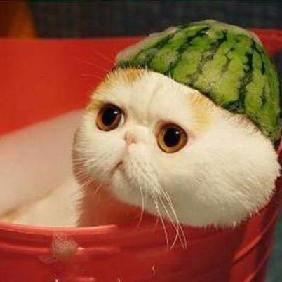 Funny Cats In Hats