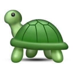 turtle (@tbhsassyturtle) Twitter