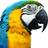 naijaparrotng's avatar'