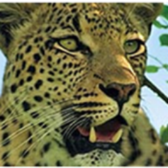 EcoAfricaExperience