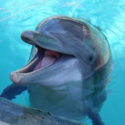 Happy dolphin in Puerto Aventuras, we saw after our first dive ...