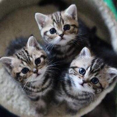 かわいい♡猫ちゃん画像