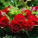 Bidhan Sarkar (@058ca3dee7ea4a8) Twitter