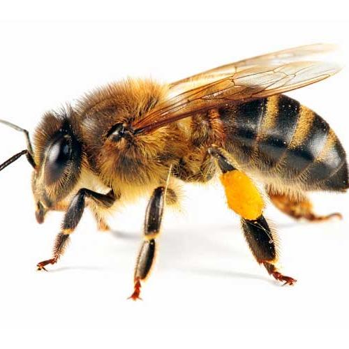 Beez Neez Honey Beezneezhoney Twitter