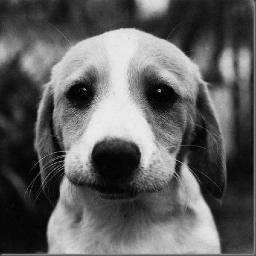 DC Dog Finder