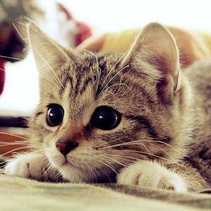 Pics of Cute Cats PicsOfCuteCats Twitter