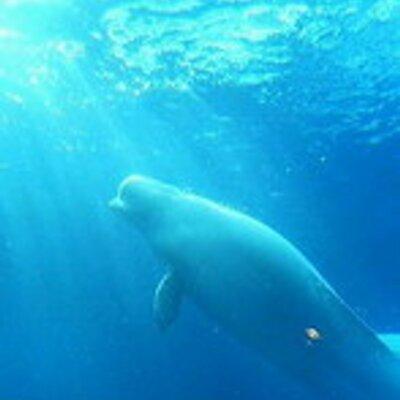 しっぽ を なく した イルカ