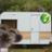 Caravan Canary