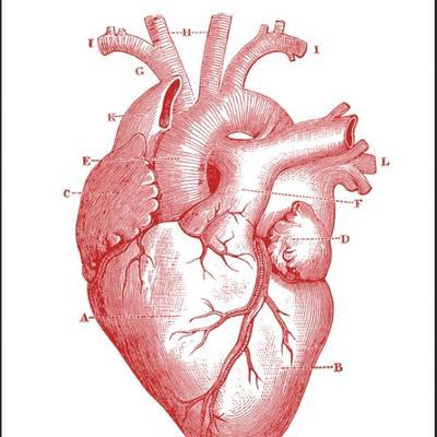 Anatomy Help Anatomypal Twitter