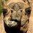 camelshiit