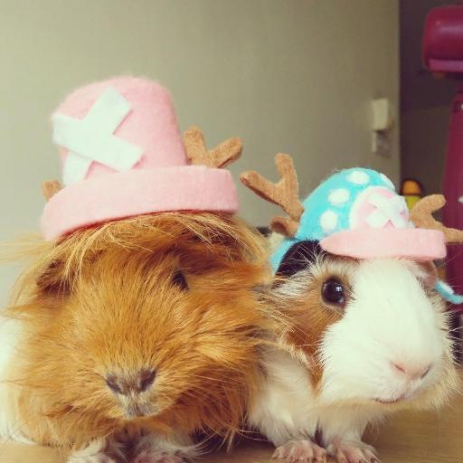 Pet Fashion Costumes