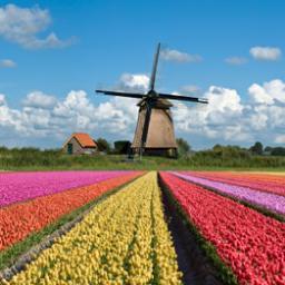Netherlands-Trending