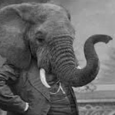 Elephant In The Room (@Elephantminded)   Twitter