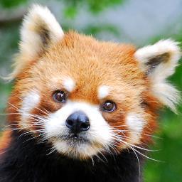 Panda 23Videos
