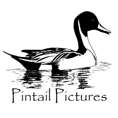 Pintail Pictures