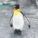 ペンギン (@0203Anzu) Twitter