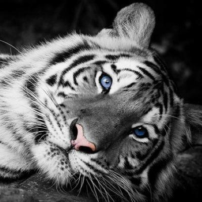 A Maldição Do Tigre On Twitter Apelidos De Ren Priya Rajkumari