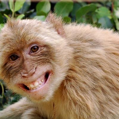 gay monkeys Why are