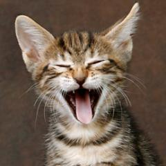 Funny Kittens (@kittens_funny) | Twitter