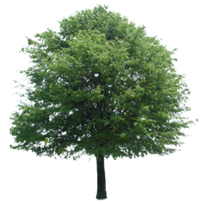 Catford Street Trees on Twitter: