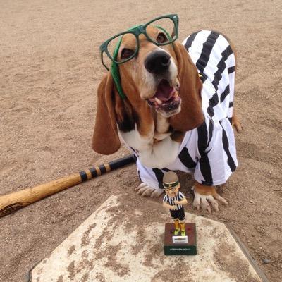 Lifelong A's fan. Bay Area sports junkie. Crazy dog lady.