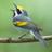 songbirder74
