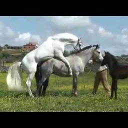 の 競馬 馬 交尾