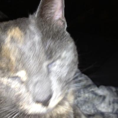 Cat Lady Persists