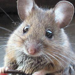 Image result for matty mouse