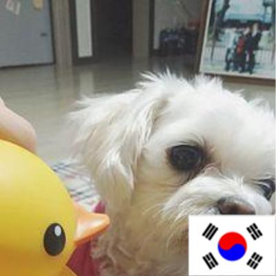 K-POP Twitter