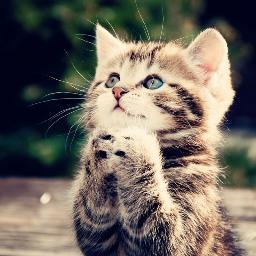 Chatchatcatcat