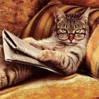 カラバの猫