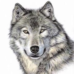 Image result for warner elementary wolves pictures