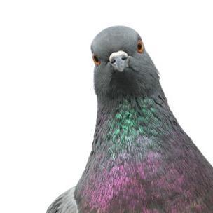 Drunk pigeon on twitter only got one bastarding birthday card and drunk pigeon bookmarktalkfo Images