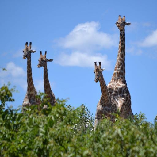 ruanda tourismus