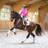 Equestrian Pics