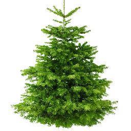 real christmas trees - Real Christmas Trees