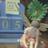 therosybubble's avatar'