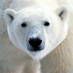 PolarbearPC
