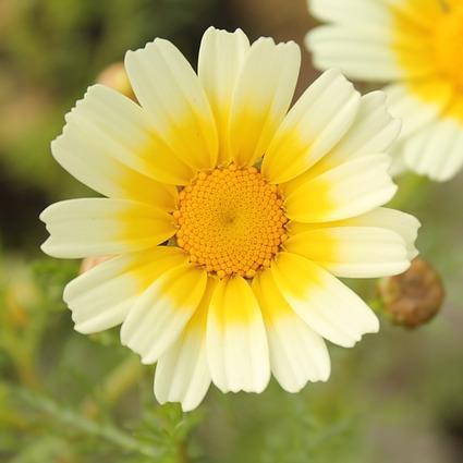 a flower of god flowerofgodblog  twitter, Beautiful flower
