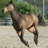 horse_names