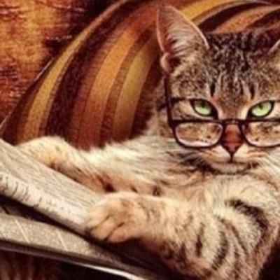 картинки учёный кот