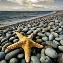 star fish (@0503728655Star) Twitter