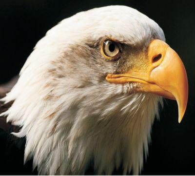 Eagle Auto Sales >> Eagle Auto Sales Eagleautotx Twitter