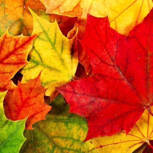 autumnh75