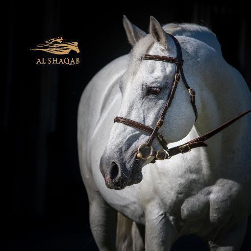 Al Shaqab Arabians