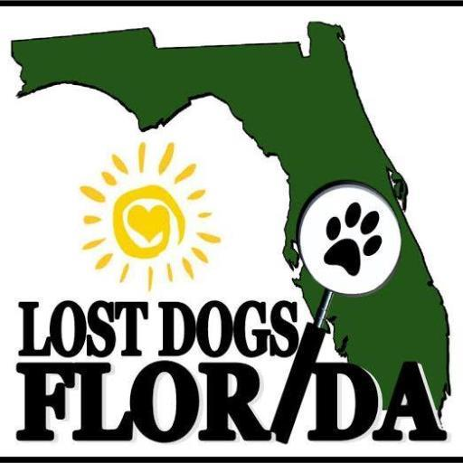 Lost Dogs Florida